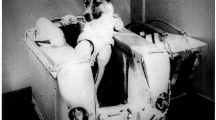 Уважение, космическим первопроходцам - собака Лайка, без права на возвращение