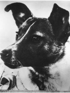 """""""Самая лохматая, самая одинокая, самая несчастная в мире собака"""" (""""Нью-Йорк таймс"""", 5 ноября 1957 г.)"""